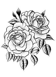 Twin Rose …