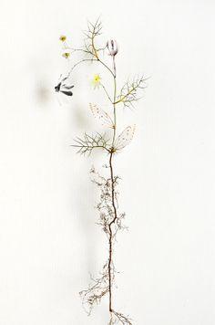 Flowers and paper by Anne Ten Donkelaar