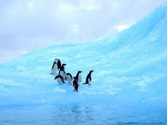 Early morning in Antarctica: 25 Finalists from Last Year's Contest : Condé Nast Traveler