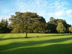 Park ve Skiptonu