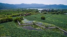 Tuying wetland park covers an incredible 30,000 square feet of Taihu Lake and is surrounded by mountains on three sides of the water
