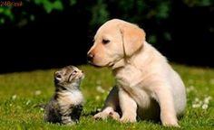 Faculdade realiza evento para prevenir DSTs em cães e gatos em Manaus