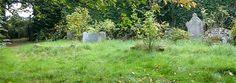 gravestones in old apple orchard, Eardsley, Herefordshire