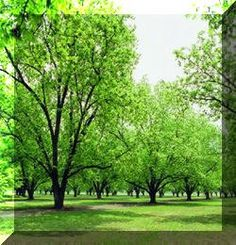 PECAN GROWING IN ALABAMA- a good beginning resource to use for choosing a pecan tree.