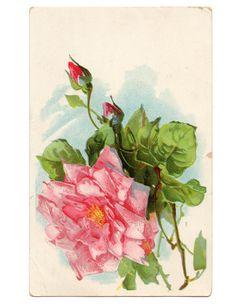 Royalty-Free-Vintage-Rose-Image-FPTFY-web