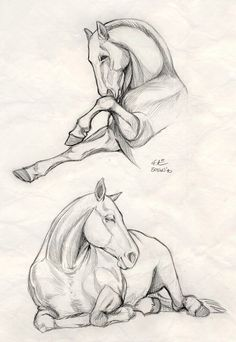 Discover thousands of images about How to draw horses. My friend Meghan really loves horses, so I geuss that I gonna to make a horse sketch for her! Realistic Animal Drawings, Horse Drawings, Art Drawings, Cartoon Drawings, Animal Sketches, Drawing Sketches, Pencil Drawings, Pencil Art, Sketching
