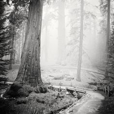 Ca Usa, Gelatin Silver Print, Frame Sizes, Fine Art Paper, Wall Mount, Black And Brown, Exhibitions, Plants, Study