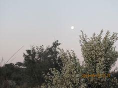 O despontar da Lua - Visto da Patinha da Burra - Santo António das Areias
