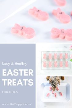 Easy DIY Dog Treat Recipe for Easter Learn what food is good for your beloved dog and know what not to feed him. Learn how to make food and treats so your dog doesn't get harmful chemicals. Puppy Treats, Diy Dog Treats, Homemade Dog Treats, Healthy Dog Treats, Homemade Toys, Dog Biscuit Recipes, Dog Treat Recipes, Dog Food Recipes, Food Tips