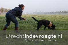Op zondagochtend gaat Marion speuren met Nanu, haar jonge Duitse herder. Dit gebeurt onder leiding van een trainster van WHG Rijnenburg op een veld in Papendorp. Nanu wacht in de auto terwijl Marion een spoor uitzet met als beloning aan het eind een balletje. Nanu is razend enthousiast! Terug in de auto krijgt hij zijn ontbijt. Bekijk het hele beeldverhaal op http://www.utrechtindevroegte.nl/project/speuren-met-nanu/