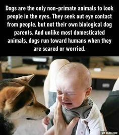The dog looks so worried!