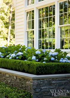 Front Yard Landscaping 50 Most Beautiful Hydrangeas Landscaping Ideas To Inspire You 026 - 50 Most Beautiful Hydrangeas Landscaping Ideas To Inspire You 026 Boxwood Garden, Hydrangea Landscaping, Boxwood Hedge, Front Yard Landscaping, Landscaping Ideas, Hedges Landscaping, Landscaping Melbourne, Landscaping Software, Front Yard Hedges
