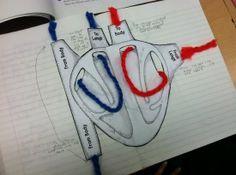 Sydämen verenkiertoa voi mallintaa villalankojen avulla!