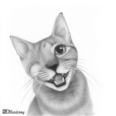 Hand drawn portrait of George the Cat. A brave little one-eyed cancer survivor :: drawn with graphite pencil on Bristol board.