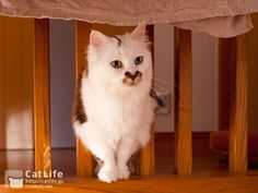 CatLife猫写真壁紙 2014年7月