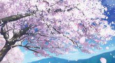 History Pink Love: Hidup bagaikan bunga sakura