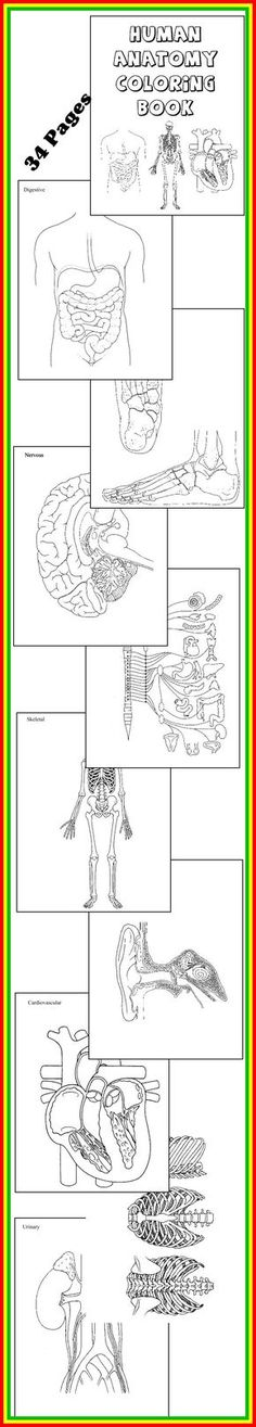 SCIENCE DOWNLOAD HUMAN ANATOMY COLORING BOOK 32 Diagrams To Color And Label