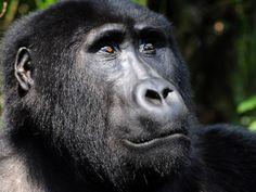5 Days Chimpanzee Gorillas Uganda