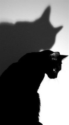 Black cat elegance <3