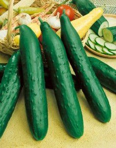 Sweet Success Hybrid Cucumber Seeds - Cucumis Sativus - 0.5 Grams - Approx 15 Gardening Seeds - Vegetable Garden Seed by Generic Seeds. $2.88. Germination Rate: 99% - Purity: 99% - Country of Origin: USA. Days Until Harvest: 54. 0.5 Grams: Approx 15 Seeds. Cucumis sativus. Generic Seeds: The Same High Quality Seeds Made By Mother Nature Just in Cheaper Packaging. The Sweet Success hybrid is an early cucumber that grows seedless when isolated from other cucumbers. T...