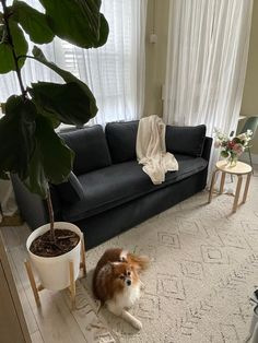 I'm sharing how I made bedroom number two work harder for us, and if you're lucky enough to have a spare room, you might consider some of these ideas for your space, too. Multipurpose Guest Room, Outdoor Sofa, Outdoor Furniture, Outdoor Decor, Mtv Cribs, Apartment Therapy, Living Room Designs, Living Room Decor, Couch