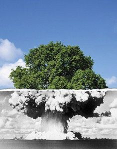 """There is a thin line between life and death"" by Muhamed Bašić in Bosnia. Street art interacts with nature."