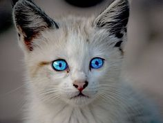 Things that make you go AWW! Like puppies, bunnies, babies, and so on. A place for really cute pictures and videos! Cute Cats Photos, Cute Pictures, Animal Pictures, Crazy Cat Lady, Crazy Cats, Kids Playhouse Plans, Cat Light, Cat Info, All About Cats