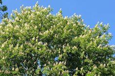 Kukkapenkki puun alle - Kotipuutarha Boho Decor, Park, Plants, Gardens, Outdoor Gardens, Parks, Plant, Garden, House Gardens