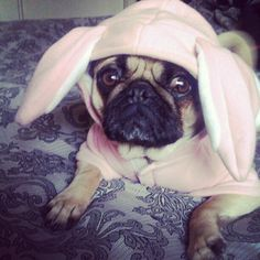 easter puggy is ready to go :)