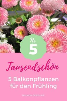 Balcony flowers for spring - # balcony # flowers # spring - balcony flowers for . Bellis Perennis, Popular Paintings, Balcony Flowers, Garden Wedding Dresses, Different Shades Of Pink, Floral Sleeve, All Holidays, Flower Boxes, Shade Garden