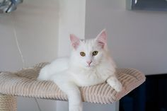 S*Strickertgardens White Princess - 6,5 Months of age | Flickr – Compartilhamento de fotos!
