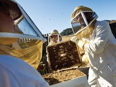 Carmel Valley Ranch  Get your buzz on (sans cocktails) with Carmel Valley Ranch's new Bee Experience. After suiting up in protective gear, you'll brave the hives of honeybee colonies and master the sweet art of honey harvesting.