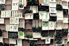 """Plantas vivas, plantas dibujadas y frases tan bellas y profundas como la de Jordi Sabater Pi, que dice: """"Si dibujas, observas, si observas, conoces, si conoces, amas, y si amas, proteges"""". Temps de Flors, Girona."""