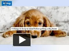 http://www.powershow.com/view0/8680dc-Y2E2Z/5_Things_to_Keep_in_mind_before_getting_a_dog_home_powerpoint_ppt_presentation