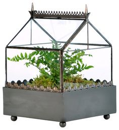Square Terrarium Gothic Style - traditional - indoor pots and planters - H Potter