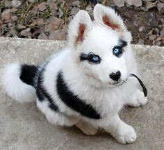 Funny puppy with blue eyes | Funny pictures