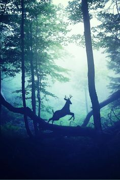 archetypal wonder. deer chasing means follow your dreams & creativity... More