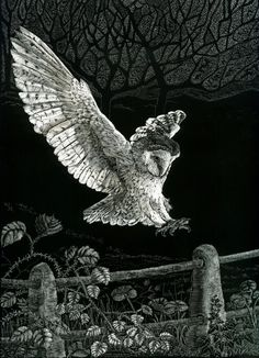 Barn Owl / Caught in Flight   Fine Art Print of by KayLeverton, £55.00