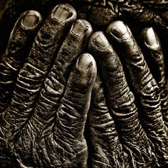 Old Hands.... just beautiful, hands always tell a story about you! I love them, I am a gardener by trade and yes, they tell tales on me!