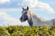Wild Pony Eglwysilan South Wales [1024x681][OC] - http://ift.tt/2cUEm03