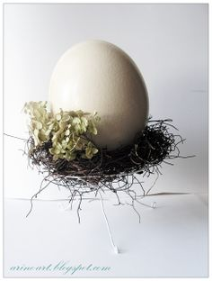 Strusie jajo