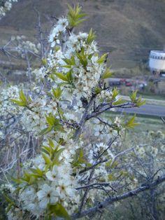 Golden, Colorado, April 2010