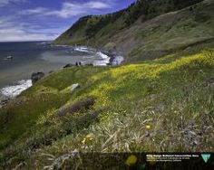 Beautiful photo from the King Range National Conservation Area along the Lost Coast of California. For many, hiking the Lost Coast is a treasured way to experience this amazing coastline.