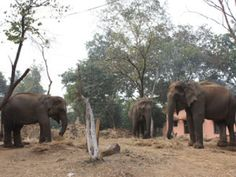 Dalma elephants move into the borders of Odisha. The Odisha paid notice to the Bengal forest department's appeal and filled the ditches along the border.