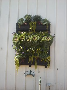 #verticalwall#palletplanter Fall Planters, Plants, Projects, Log Projects, Blue Prints, Planters, Fall Window Boxes, Plant, Planting