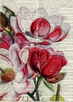 magnolia II - vintage artwork printed on page from old dictionary. $12.00, via Etsy.