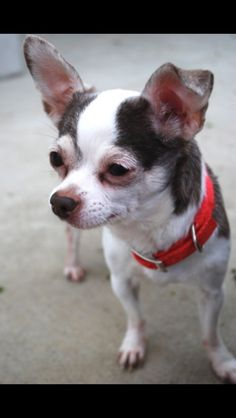 Hi! Staff is still getting to know me. Please check back soon, or stop out to the shelter to meet me!