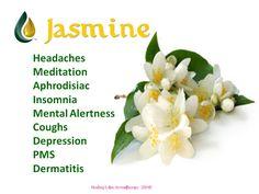 Jasmine essential oil- Love the way Jasmine smells. Very soothing. Healing Herbs, Medicinal Herbs, Natural Healing, Natural Oils, Natural Herbs, Jasmine Essential Oil, Essential Oil Uses, Doterra Essential Oils, Jasmine Oil