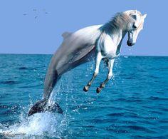 (2012-03) Dolphin + horse = dorse?