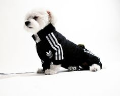 Adidas Dog Jumpsuit For Ballin' Dogs. I should get one for Wrig!! He & Jon can match!! Haha